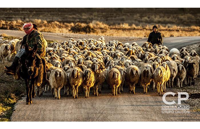 El trabajo de estos jóvenes no es solamente cuidar las ovejas, sino también de defender su ciudad.  Durante la noche cambian su piedra y palo, por un arma ya que a pesar de no tener entrenamiento formal, son también soldados.  y es que la guerra los recluto sin pedirles permiso, robo su juventud por la necesidad de defenderse, por la necesidad de proteger a sus familias.   Y muchos de nosotros nos quejamos por cosas insignificantes.
