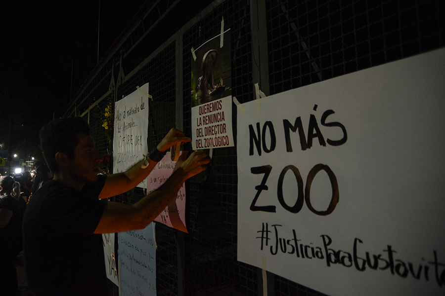 Un grupo de ciudadanos protestaron a las afueras del Parque Zoológico Nacional luego que se informara de la muerte del hipopótamo Gustativo, que se presume fue atacado por sujetos desconocidos, causándoles graves heridas. Foto: Vladimir Chicas
