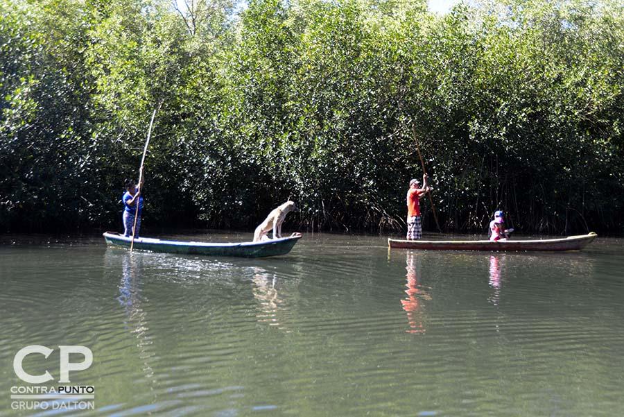 Comunidades organizadas trabajan en la protección  del manglar Garita Palmera, San Francisco Menéndez, Ahuachapán, afectado por el desvío de los afluentes de agua dulce, hecho por las empresas cañeras que excavan pozos en el lugar.