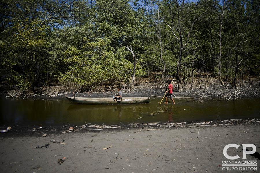 El manglar de El Botoncillo ha sido afectado por la sequía, por lo que miembros del Comité Microcuenca El Aguacate trabajan en su protección. Comunidades organizadas trabajan en la protección  del manglar Garita Palmera, San Francisco Menéndez, Ahuachapán, afectado por el desvío de los afluentes de agua dulce, hecho por las empresas cañeras que excavan pozos en el lugar.