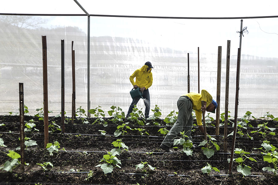 En la granja  se construyeron dos invernaderos para hortalizas, en los que trabajan los reos de lunes a viernes.