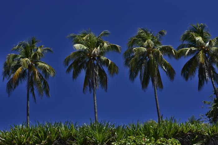 La naturaleza es un atractivo muy especial, pues playa El Zonte aún mantiene muchas áreas ecológicas.